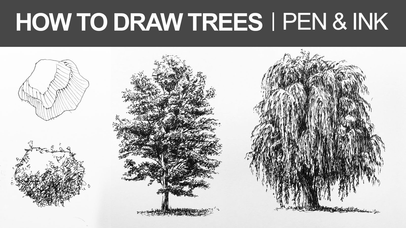 Learn How To Draw Trees With Pen And Ink In This Lesson
