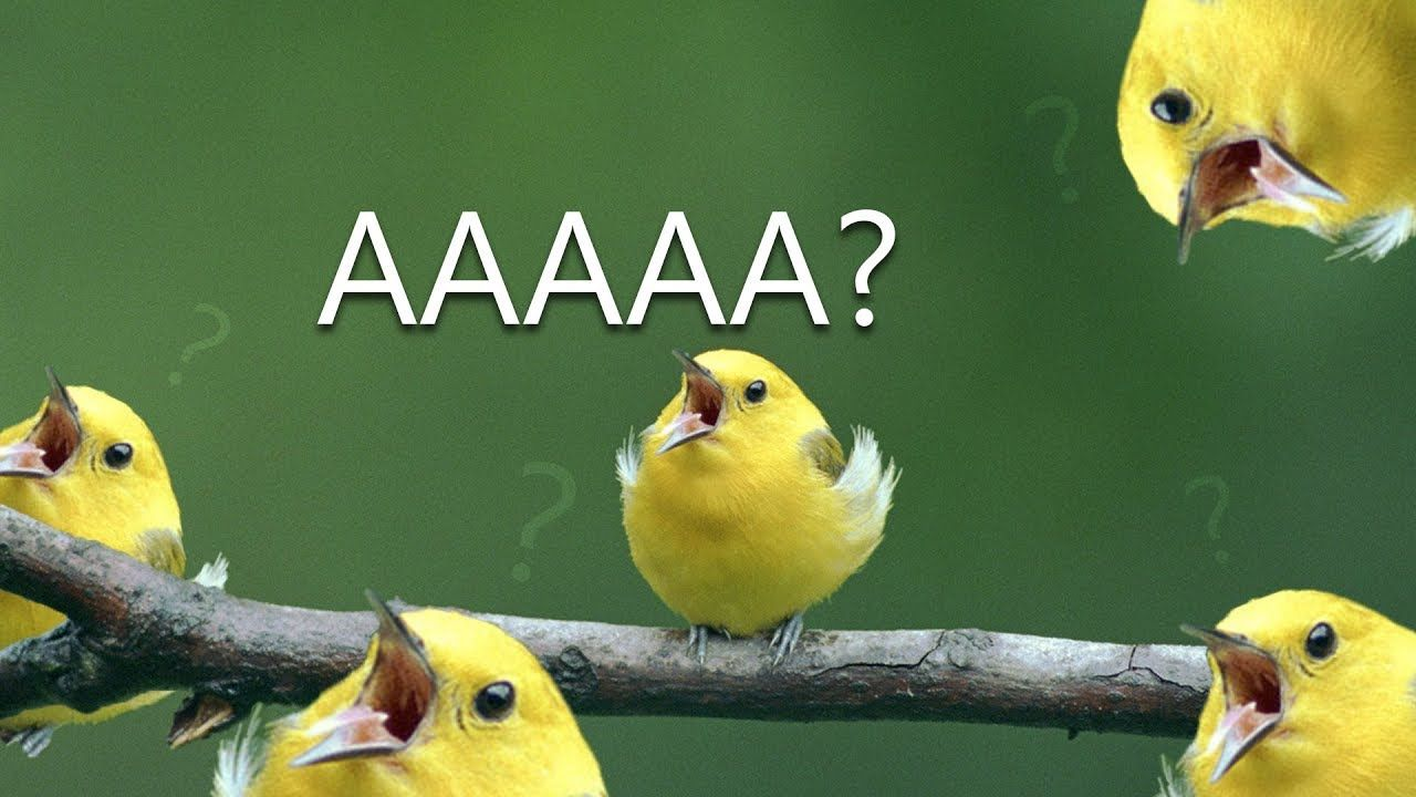39 Birb Memes That Ll Make You Coo With Pleasure Funny Parrots Funny Animal Memes Funny Birds