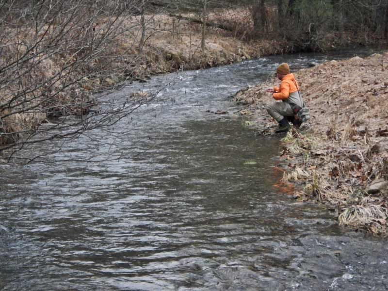Nymphing on a wild Rainbow Trout stream near Edinburg, Virginia.