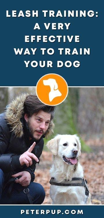 Dog Training Facts Dog Training Zak George Dog Training Pitbull