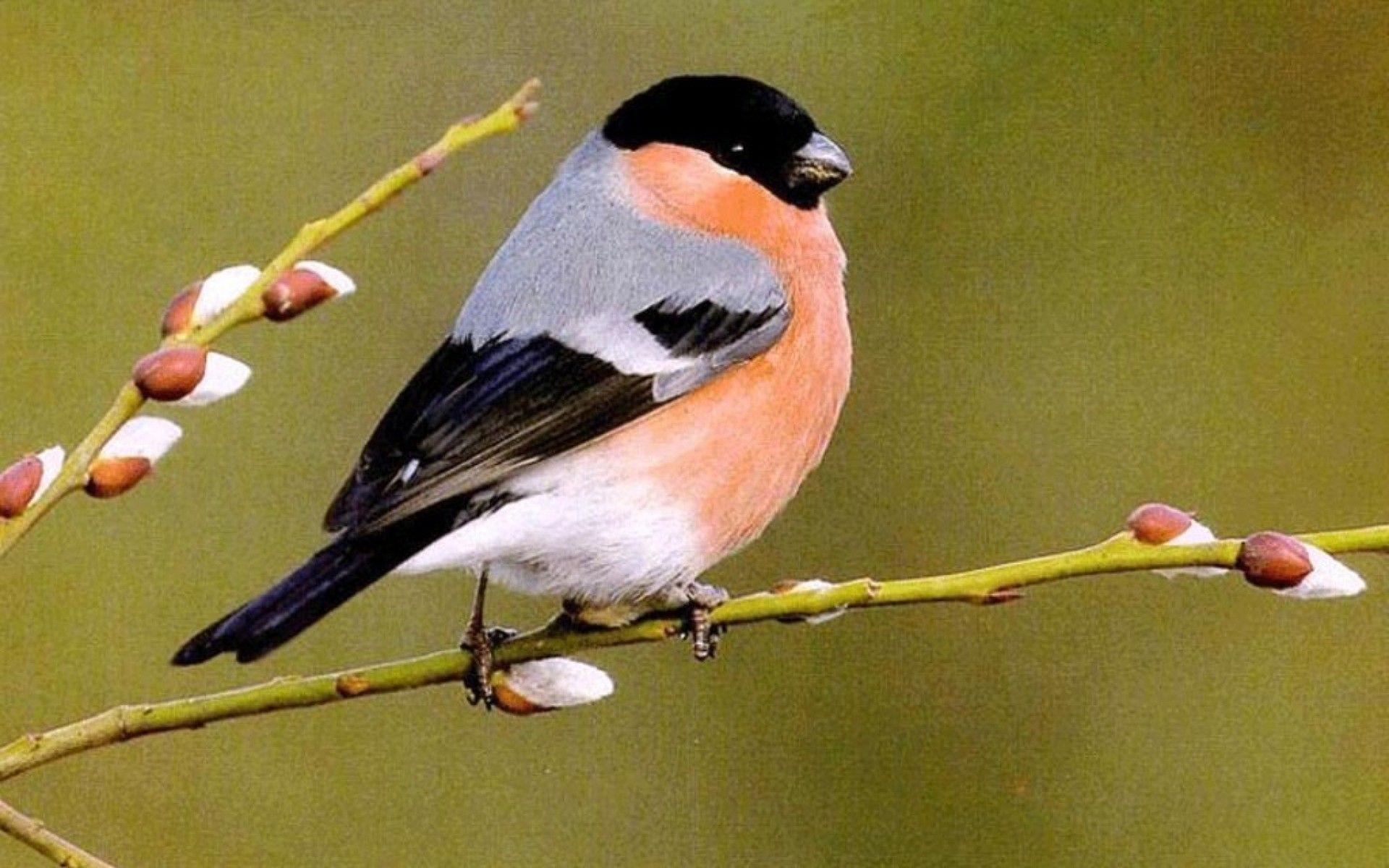 Обои Птичка, семена. Животные foto 12
