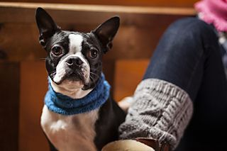 Image By Sue Harter On For Our Furry Friends Pattern Collar