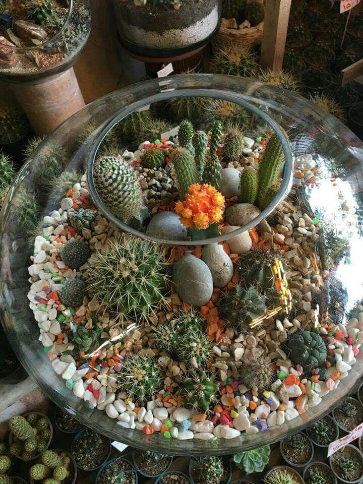 Pin De Kaden Em Kaden Bedroom Jardinagem Em Vasos Jardinagem Vasos