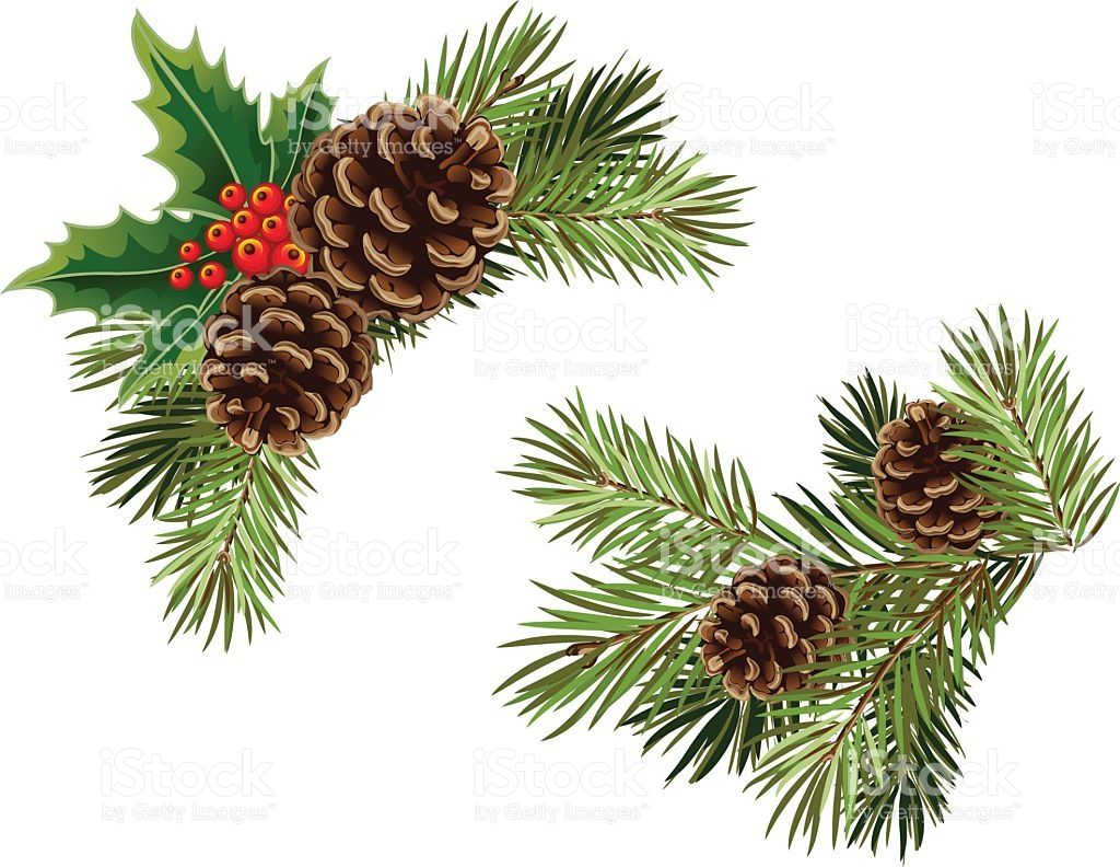 Vector Collection Of Christmas Tree Branches With Pine Cones And Christmas Tree Branches Tree Branches Branch Vector