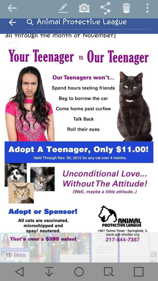 Clever Animal Shelter Design Cat Adoption Clever Dog