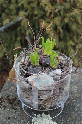 fr hlingsdekoration selber machen hyazinthe in glasgef ss pflanzen ausgarnieren bukiety. Black Bedroom Furniture Sets. Home Design Ideas
