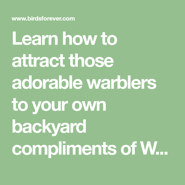 Learn How To Attract Those Adorable Warblers To Your Own