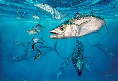 King fish | Angler Art/Photos | Marine fish, Fish, Fish art