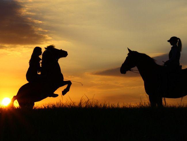 Suche Schöne Bilder schöne pferde hintergrundbilder suche horses