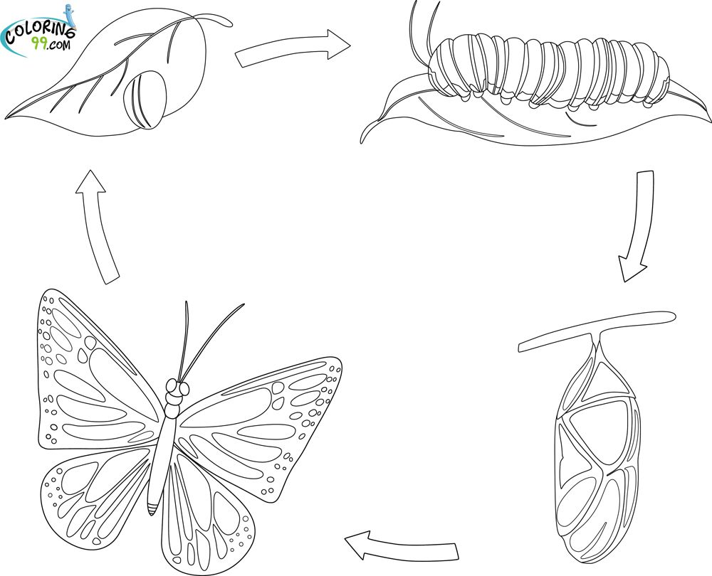 Metamorfosi Mariposa Colorear En I Fantul Buscar Con Google