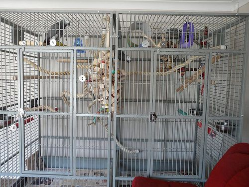 Discount Bird Toys : Bird cages: african grey cage setup discount parrot supplies