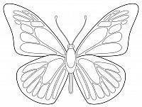 Grande Semplice Farfalla Disegno Per I Bimbi Progetti Artistici Per Bambini Progetti D Arte Modello Di Farfalla