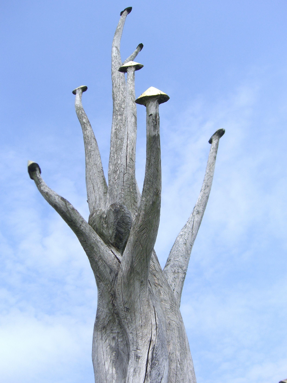 1000 Images About Unique Trees On Pinterest