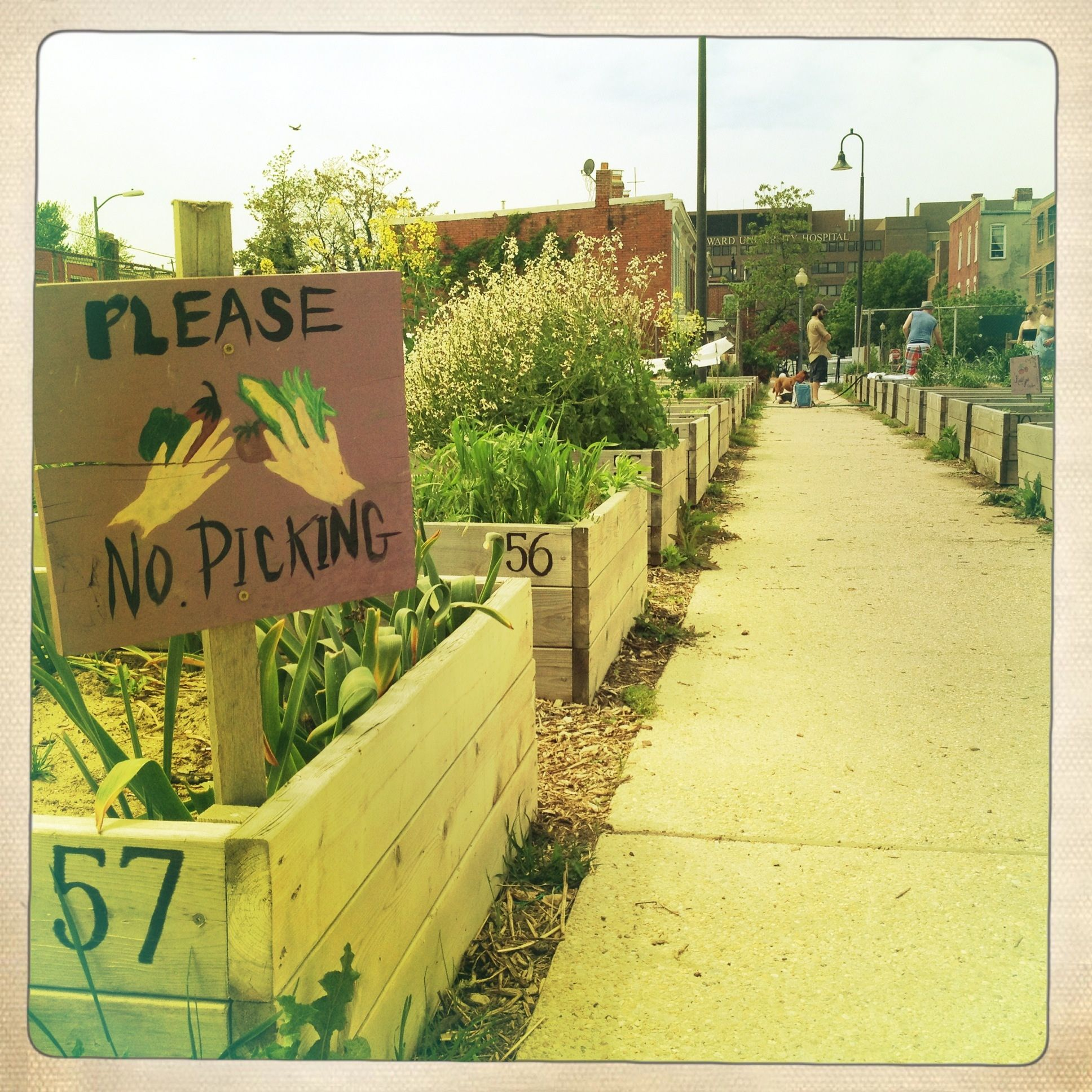 Our Neighborhood Community Garden Has Great Signs