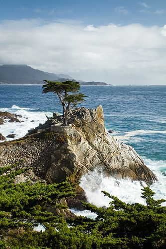 The Lone Cypress Monterey California Beautiful Places Favorite Places California Travel