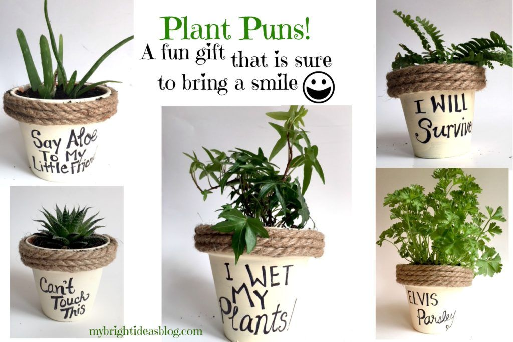 Plant Puns on Painted Potted Flower Pots Adorable Gift