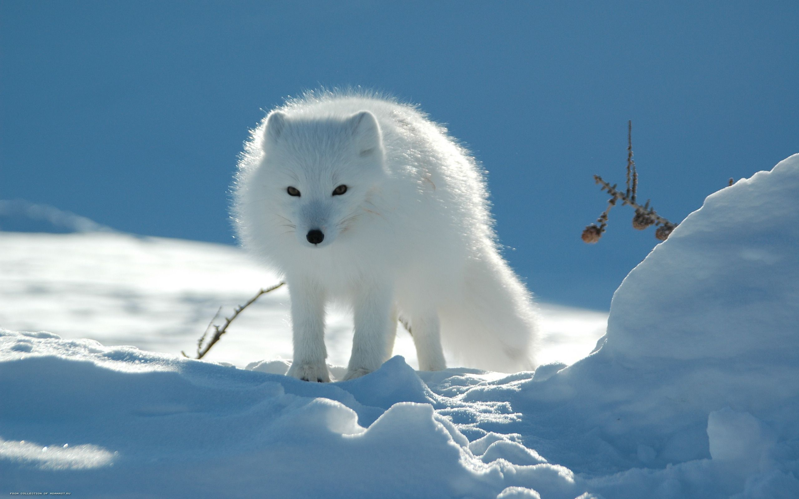 Winter Animal Wallpapers Background Snow animals, Arctic