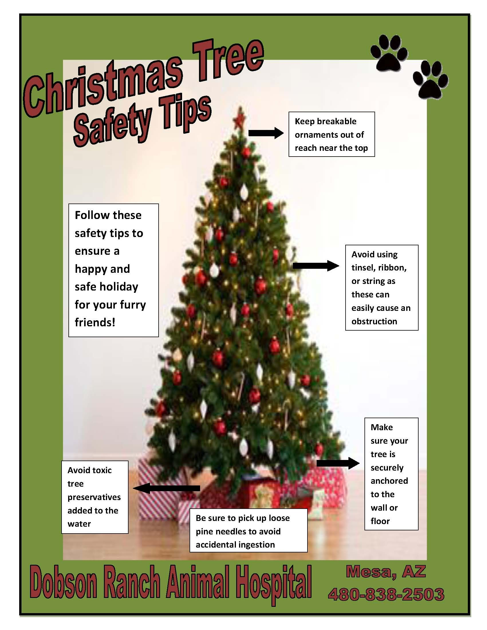 5 tips for a pet safe Christmas tree, from Dobson Ranch ...