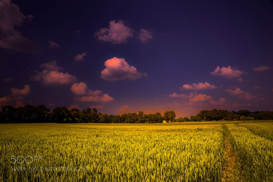 Late Afternoon by MichaelBckling. @go4fotos