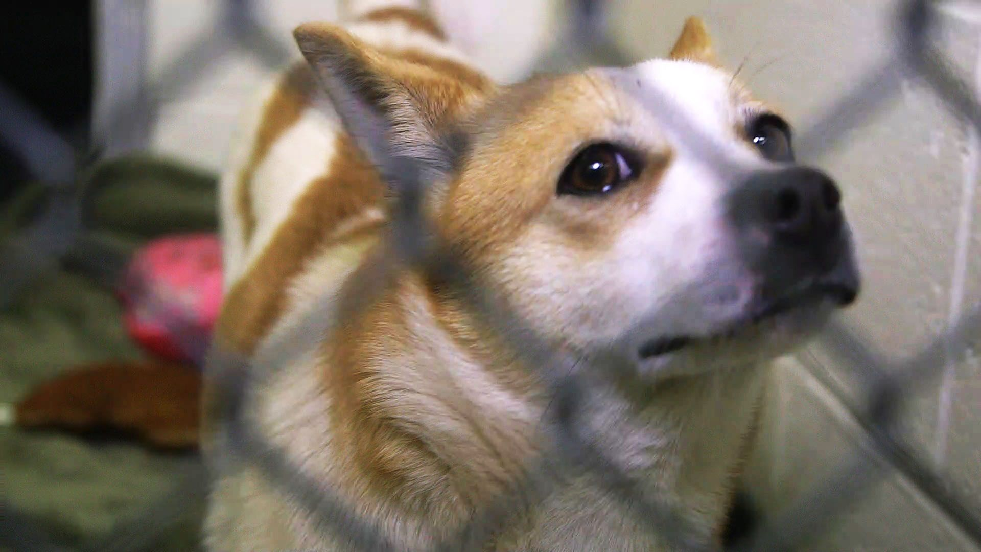 Pups Rescued From Dog Meat Farm Need Adoption Animal Welfare League Animals Images Animal Rescue Stories