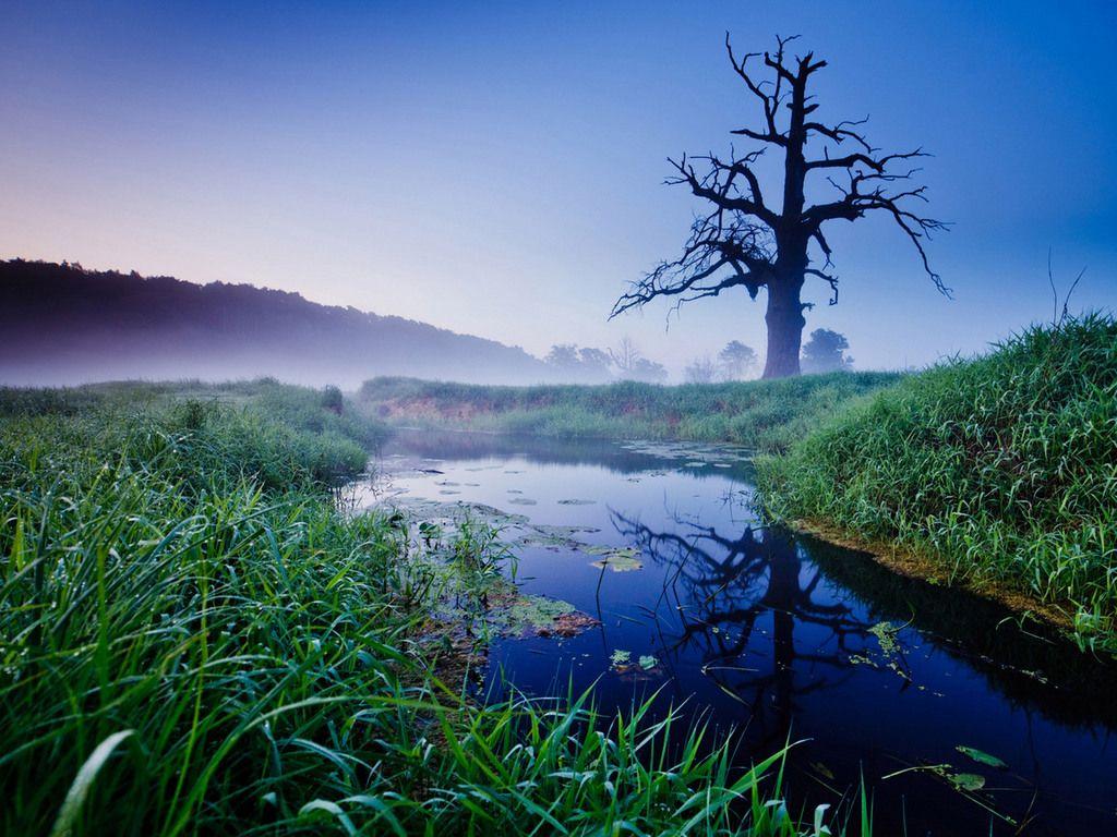 Природа - Обои для рабочего стола - Загрузка изображения ...