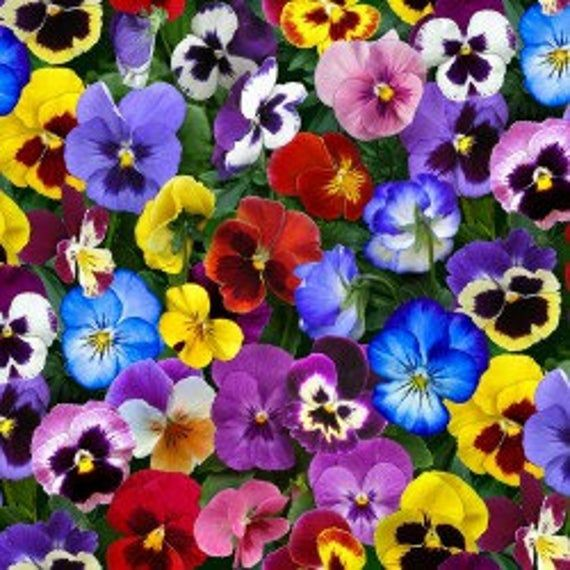 Photo of Colorful Multi Colored Pansies – Pansy Fabric – Cotton Fabric – Elizabeth's Studio – FL-11