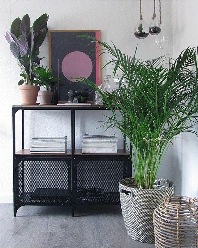 """107 Likes, 1 Comments - IKEA Taastrup (@ikeataastrup) on Instagram: """"Hos @fiefroeling står vores nye rustikke reol FJÄLLBO smukt omgivet af grønne planter og personlige…"""""""