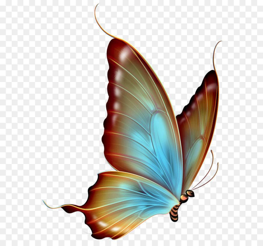 Faerie Wing S Gray And White Butterfly Wings Illustration Transparent Background Png Clipart Blue Butterfly Wings White Butterfly Butterfly Illustration