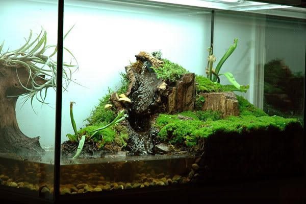 Semi Aquatic Vivarium Set Up This Is Beautifl But I Would Have To Make The Water Area Deeper For Turtles