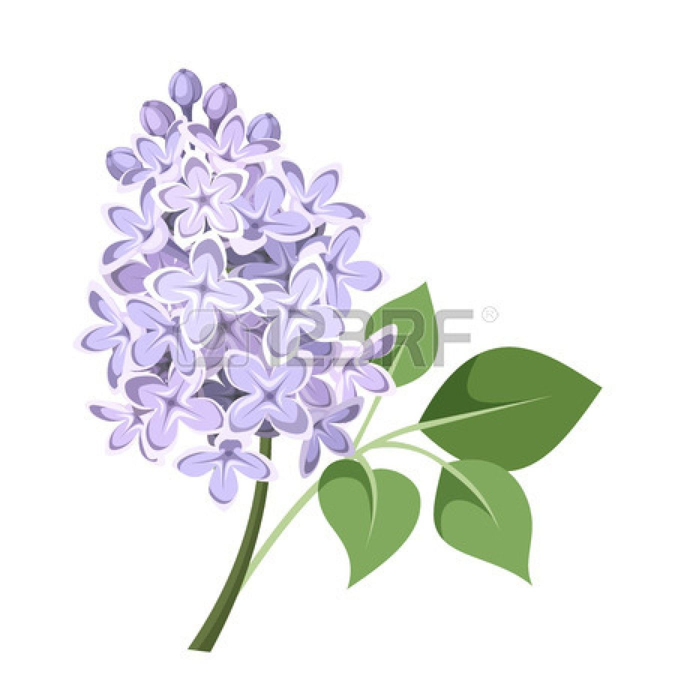 Branch Of Lilac Flowers Vector Illustration Lilac Flowers Flower Painting Lilac