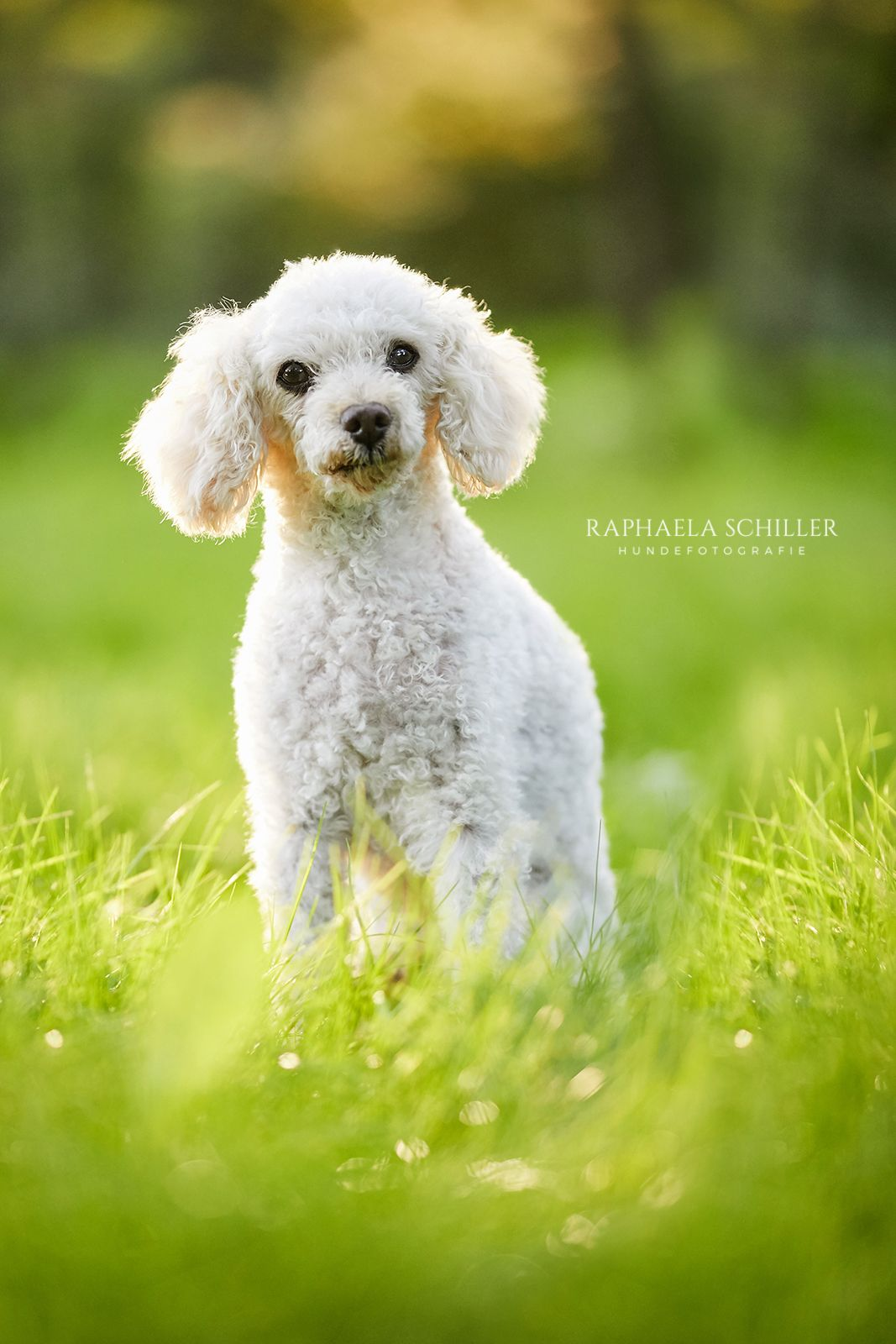 Hundefotografie Dog Photography Hundefotografie Beliebte Hunderassen Hunde