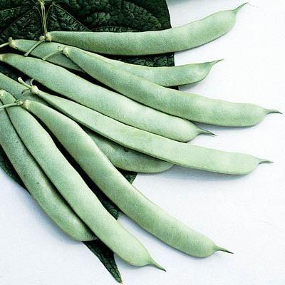 Bean Roma Ii Vegetable Seeds For Sale Beans Bush Plant