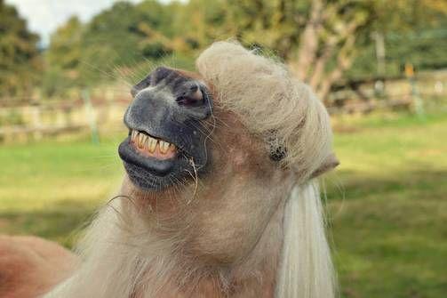Birminghamilainen poni hymyilee kameralle. Heather Ross kuvasi poniaan kotitilallaan.