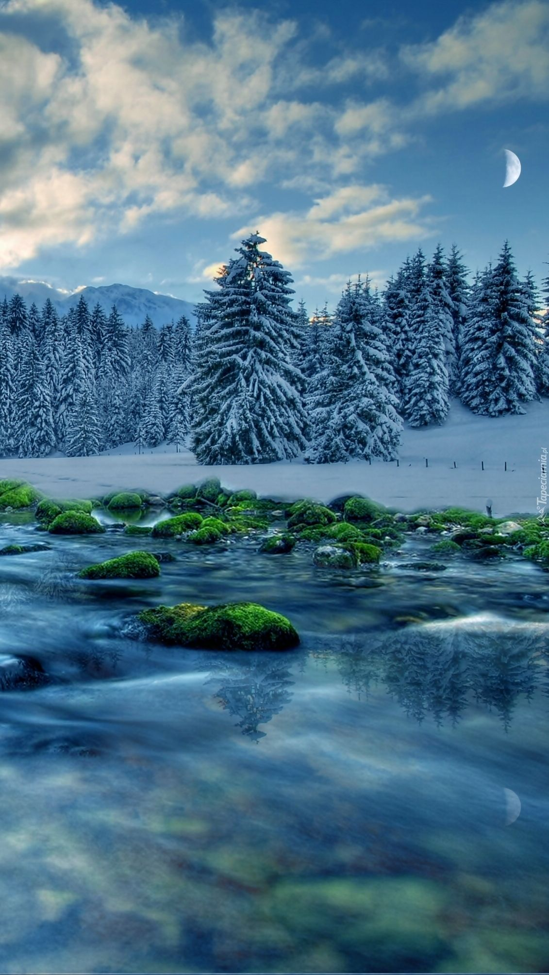 Las w zimowej odsłonie