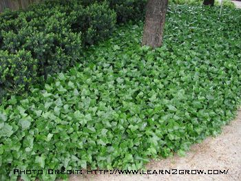 Green Preserves Ground Covers Sloped Garden Ground Cover Hillside Landscaping