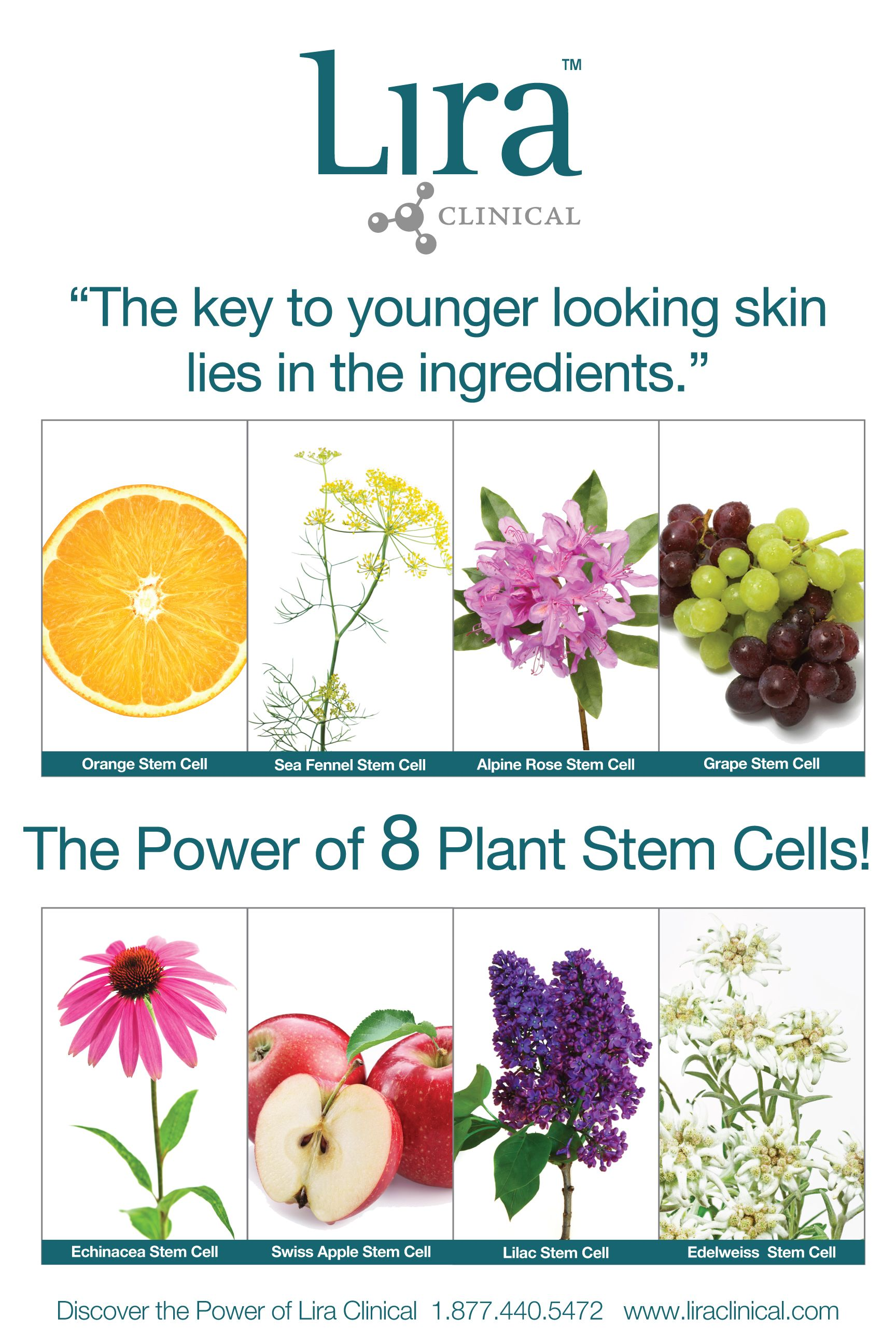 The Power Of 8 Lira Clinical Uses 8 Different Types Of Plant Stem Cells In Their Product Line Plant Stem Cell Rose Stem Cell Skin Care Clinic