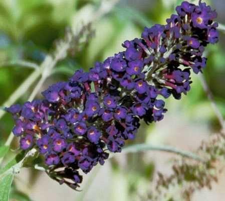 Hummingbird Remedies Flower Essences B Flower Essences Landscape Plans Flower Remedy
