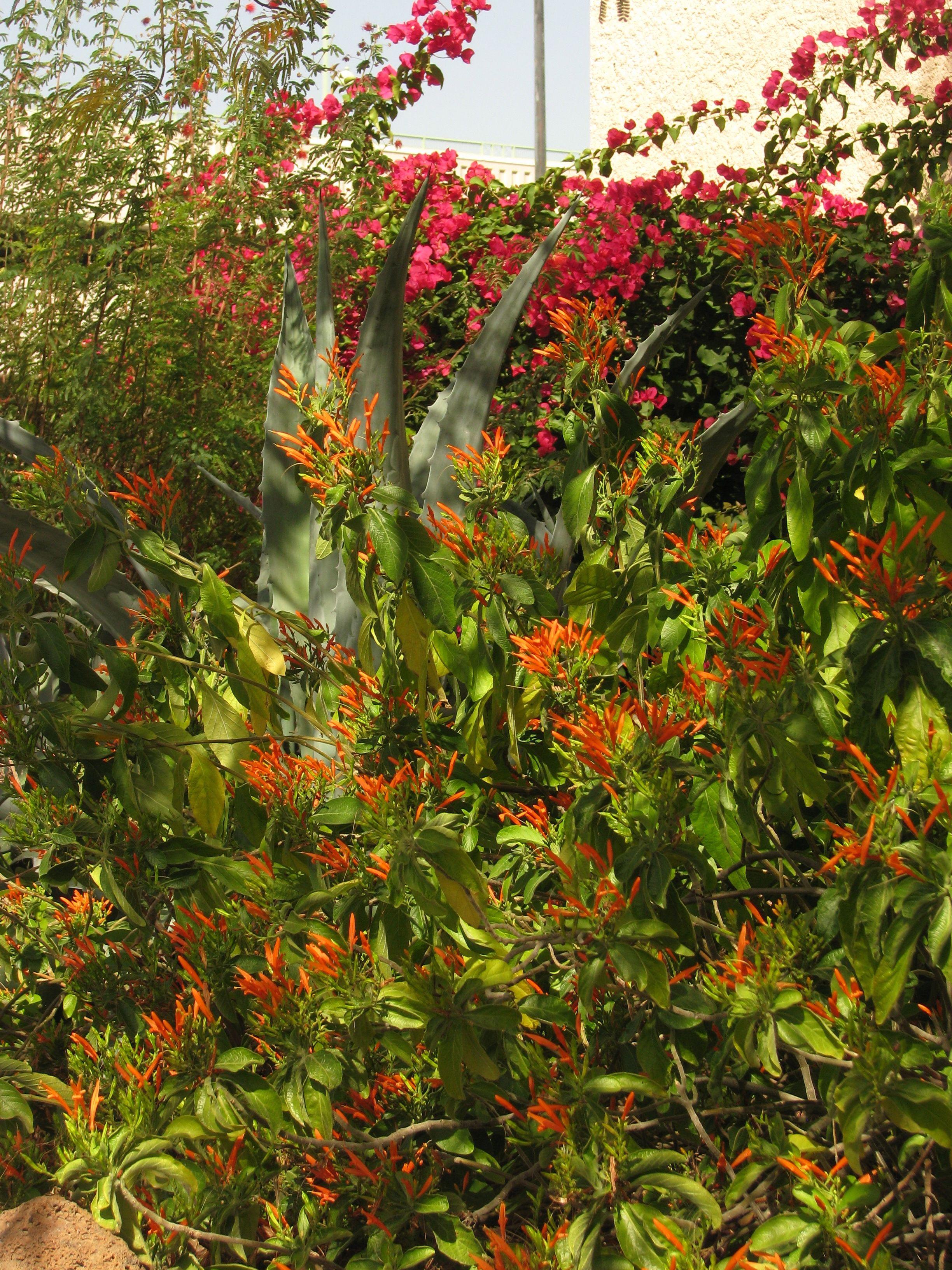 Red and orange flowers tucson pinterest orange flowers and tucson