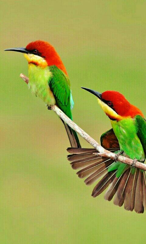 Fond d'écran oiseau | Oiseaux, Oiseaux colorés et Oiseaux exotiques