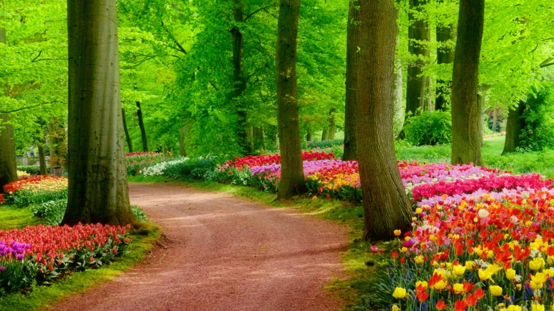 As You Walk Through Your Day Today May You Embrace God S Grace Trusting He Ll Fill Every Gap Ins In 2020 Nature Desktop Nature Desktop Wallpaper Landscape Pictures
