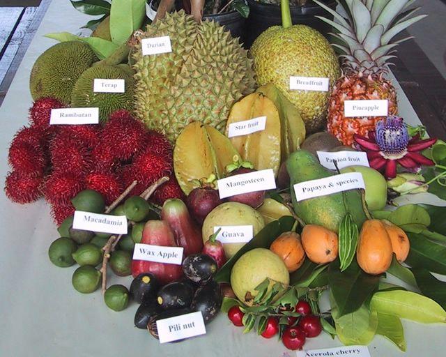 Pepeto Fruta Pepeto Fruta Majoncho Pepeto