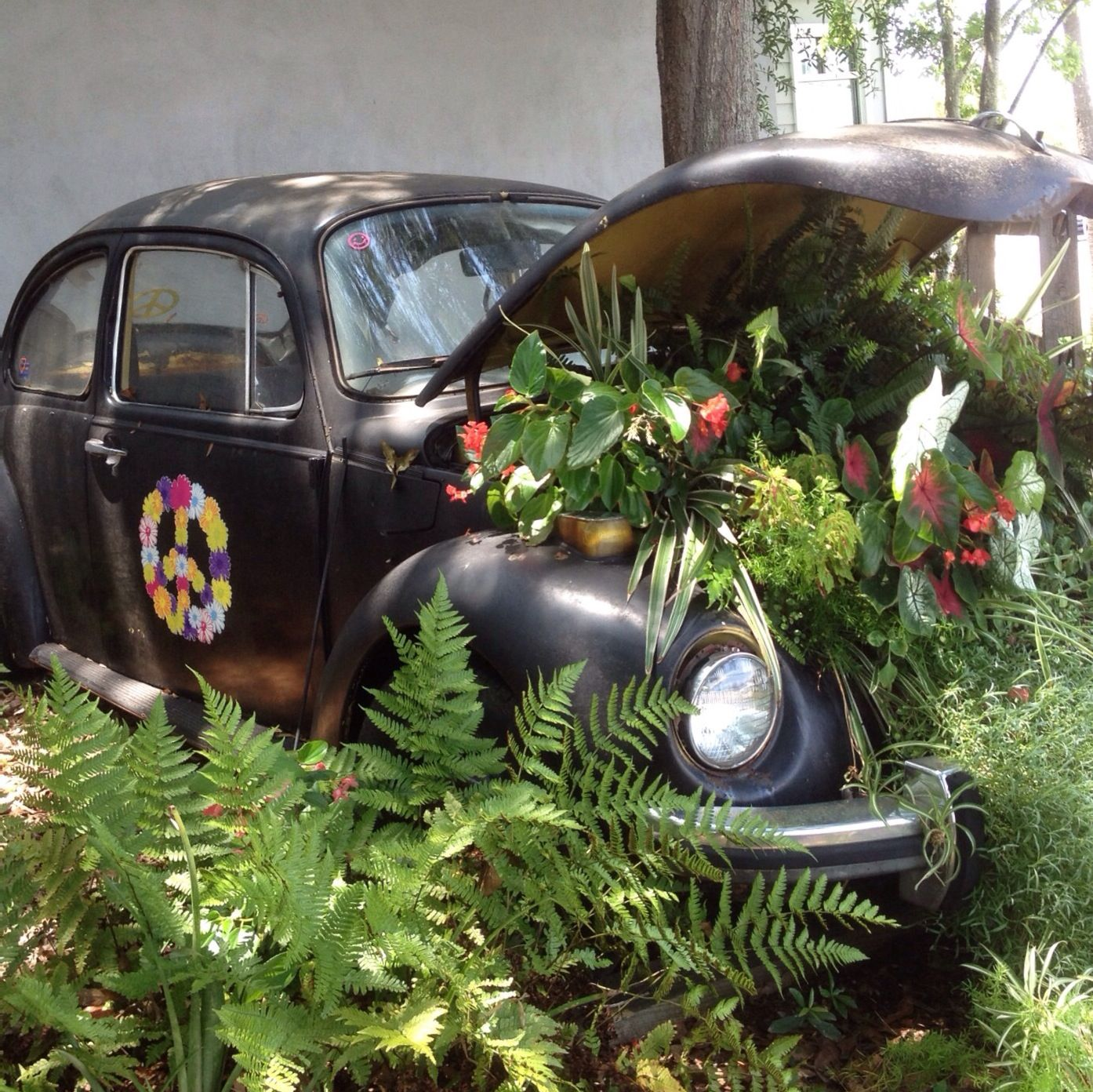 Volkswagen Mt Pleasant >> Cool Volkswagen Beetle as a garden decoration at The Pickled Palate in Mt. Pleasant, SC ...
