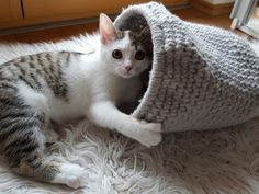 Photo of Cat cave crochet pattern