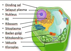 Organel Organel Sel Dinding Sel Pendidikan Gambar