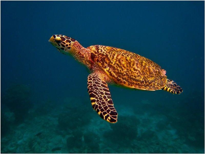 морские животные австралии картинки незнание