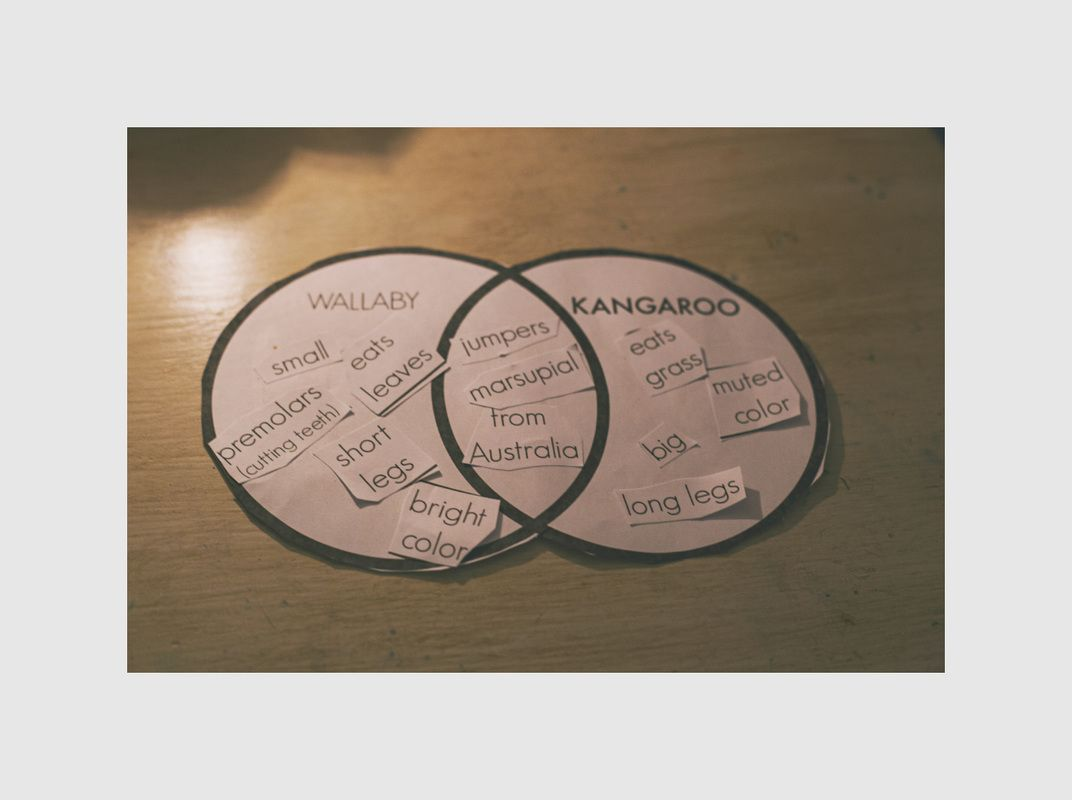 Wallaby vs kangaroo venn diagram theprintedpaige freecurriculum wallaby vs kangaroo venn diagram theprintedpaige freecurriculum freehomeschoolcurriculum homeschool ccuart Choice Image