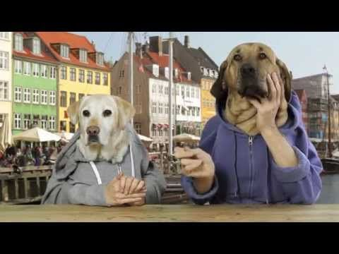 TWO DOGS DINING - YouTube