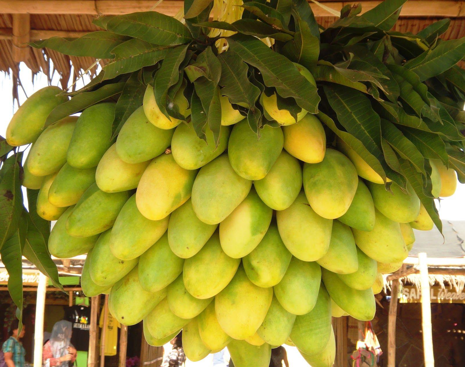 Mangoes, Philippine Mangoes  Google Search