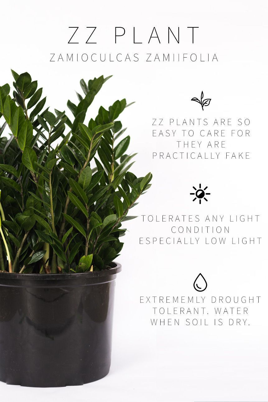Master List of Low Light Indoor Plants – Plants