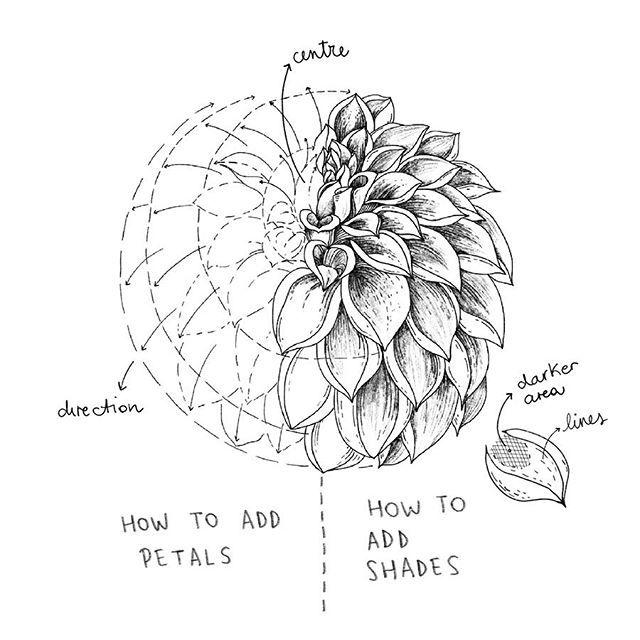 Alice Auf Instagram Dahlia Dahlias A Flower Full Of Petals For This Reason Drawing A Dahlia Flower Drawing Tutorials Flower Drawing Floral Drawing